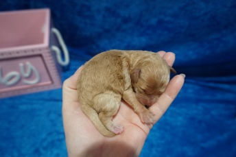5 Emma 5.7 oz 1 Day Old (18)