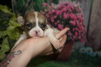 5 Penny 13.2oz 3 weeks old (26)