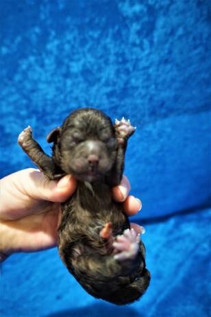 6 Clyde 6.6 oz Just Born (21)
