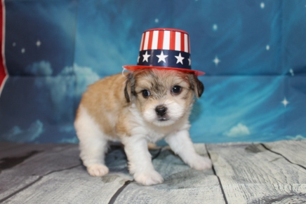 Parker Male Miki $2000 Ready 7/17 HAS DEPOSIT MY NEW HOME VIENNA, VA 2lbs1oz 5W3D Old