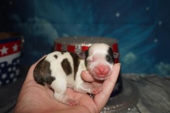 3 Pippa 6.1oz Just Born (6)
