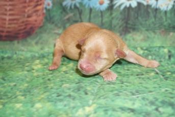3 Skippy 7.6oz 3 days old (8)