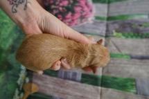 5 Skippy 7.6oz 3 days old (3)