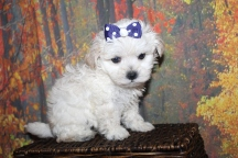6 Liza (Minnie) 1lb 6oz 7 weeks old' old (19)