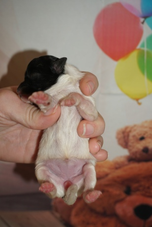 6 Pippi 3.6oz 4 days old (8)