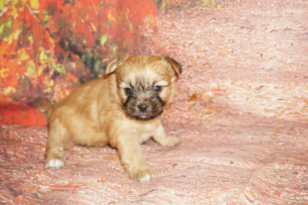 Remy Male Miki $2000 Ready 10/24 SOLD MY NEW HOME New Smyrna Beach, FL 1lb 7oz 4W2D old