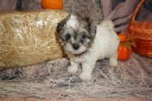4 Kippy (Sammy) 2lb 3oz 7 Weeks Old (25)