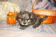6 Hippy 1lb 14oz 7 Weeks Old (2)
