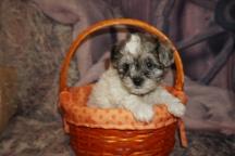 6 Kippy (Sammy) 2lb 3oz 7 Weeks Old (2)