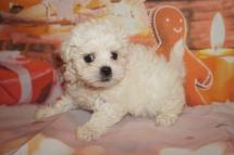2 Joy 1lb 15oz 7 weeks old (5)