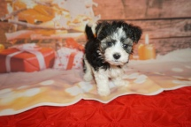 3 Jingles (Ripley) 2lb 7oz 7 weeks old (27)