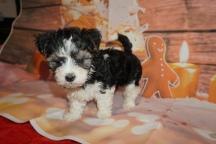 4 Jingles (Ripley) 2lb 7oz 7 weeks old (26)