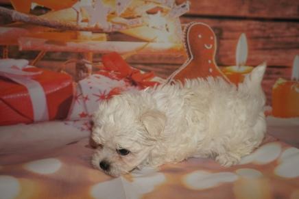4 Joy 1lb 15oz 7 weeks old (2)