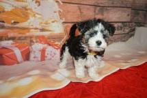 5 Jingles (Ripley) 2lb 7oz 7 weeks old (28)