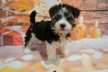 6 Jingles (Ripley) 2lb 7oz 7 weeks old (35)