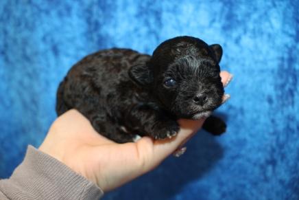 3 Pookie 13oz 2 Weeks Old (4)