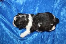 5 Cuddle Bear 15.7oz 2 Wks Old (19)
