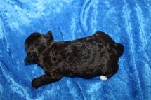 5 Pookie 13oz 2 Weeks Old (23)